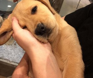 dog, mood, and puppy image