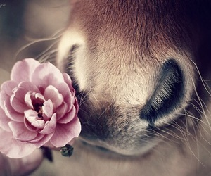 horse, flowers, and rose image