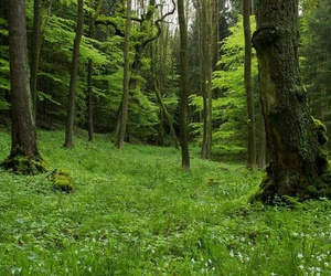 forest, woods, and green image
