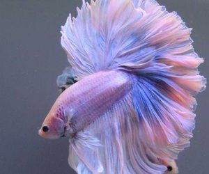 fish, pink, and purple image