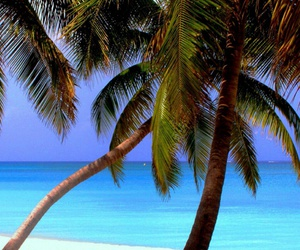 summer, palm trees, and paradise image