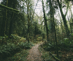 chill, forest, and road image