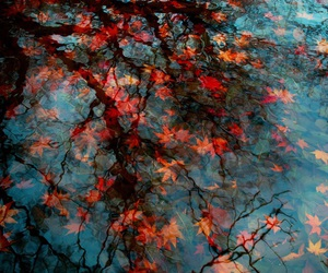 autumn, leaves, and water image