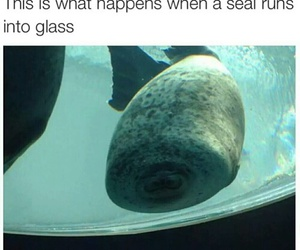 funny, seal, and cute image