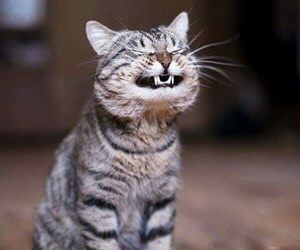 adorable, funny, and cats image