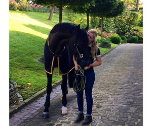 black, germany, and horse image