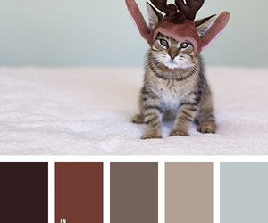 brown, cat, and colors image