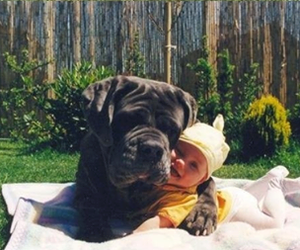 dog, baby, and cute image