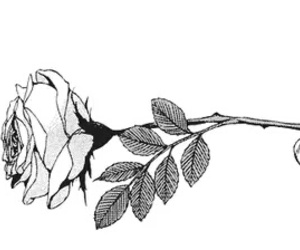 rose and manga image