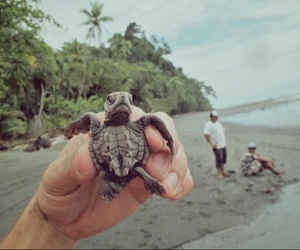 turtle and adventure image