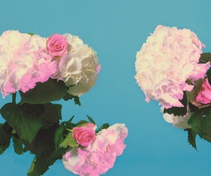 flowers, the 1975, and aesthetic image