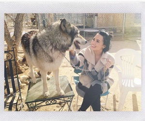 demi lovato, Queen, and wolf image