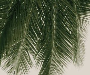 alternative, grunge, and palm image