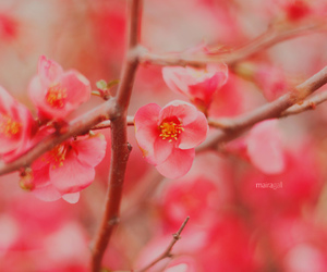 50mm, blossom, and coral image
