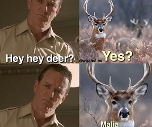 teen wolf, funny, and deer image