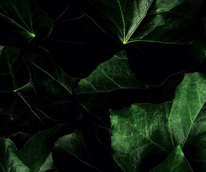 """""""green, """"dark, and """"leafs image"""