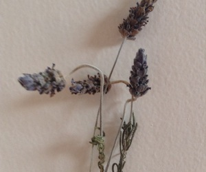 flowers, wilt, and lavenders image