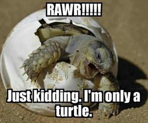 turtle, funny, and rawr image