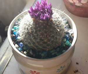 cactus, purple, and cactuses image