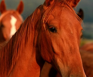 animals, beauty, and horses image