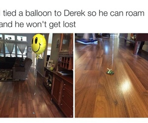 funny, turtle, and balloon image