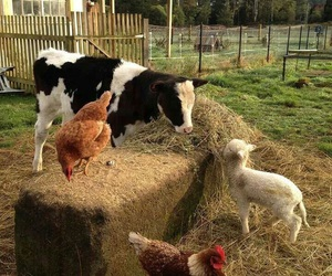 animals, cows, and friends image