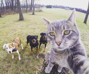 dog, cat, and selfie image