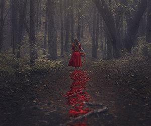 red, forest, and rose image