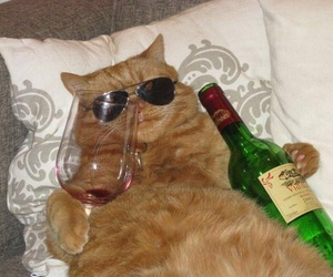cat, funny, and wine image