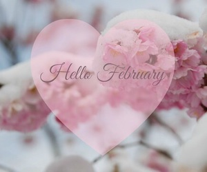 february, hello, and pink image