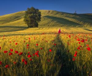 beautiful, landscape, and field image