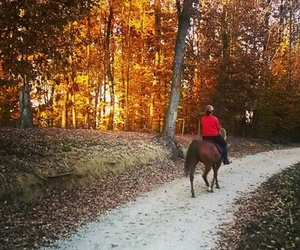 animal, fall, and horse image