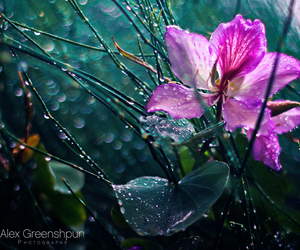 drops, flower, and macro image