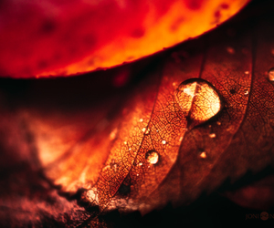 autumn, beautiful, and drops image