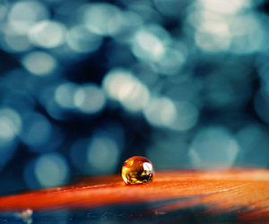 beautiful, droplet, and feather image