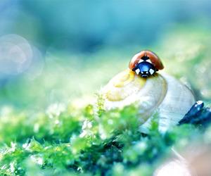 insect, ladybird, and macro image