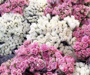 white, flowers, and pink image