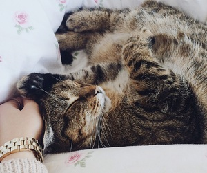 bed, cat, and cozy image