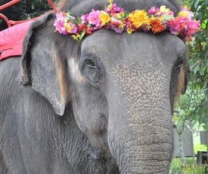 elephant, animal, and flowers image