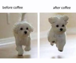 coffee, dog, and funny image