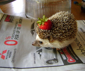 hedgehog and cute image