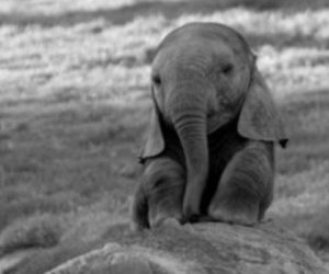 adorable, baby elephant, and beauty image