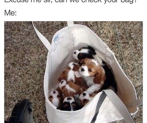 dogs, animal, and funny image
