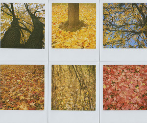 autumn, instant, and ny image