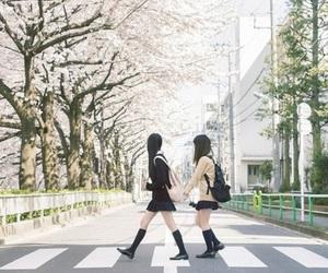 girls, japan, and sakura image