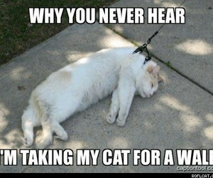 cat, funny, and walk image