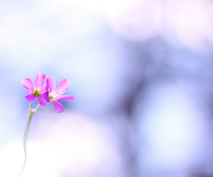 bokeh, dreaming, and flor image