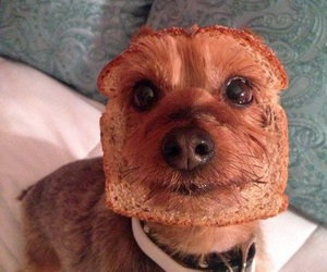dog, funny, and bread image