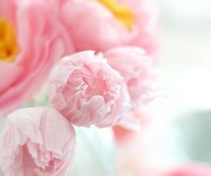 flowers and pastels image