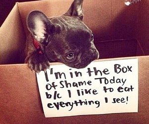 dog, box, and funny image